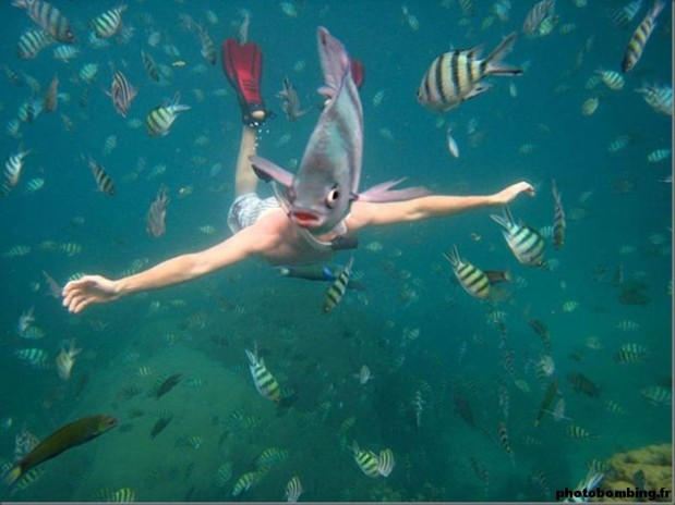 photobombing-animal-poisson